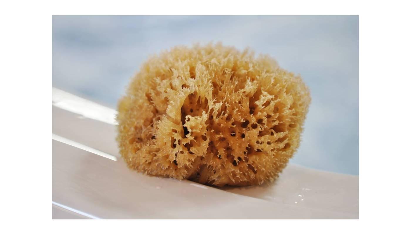 "Eponge Honeycomb / Nid d'abeille - Naturelle 4"" / 10 cm"